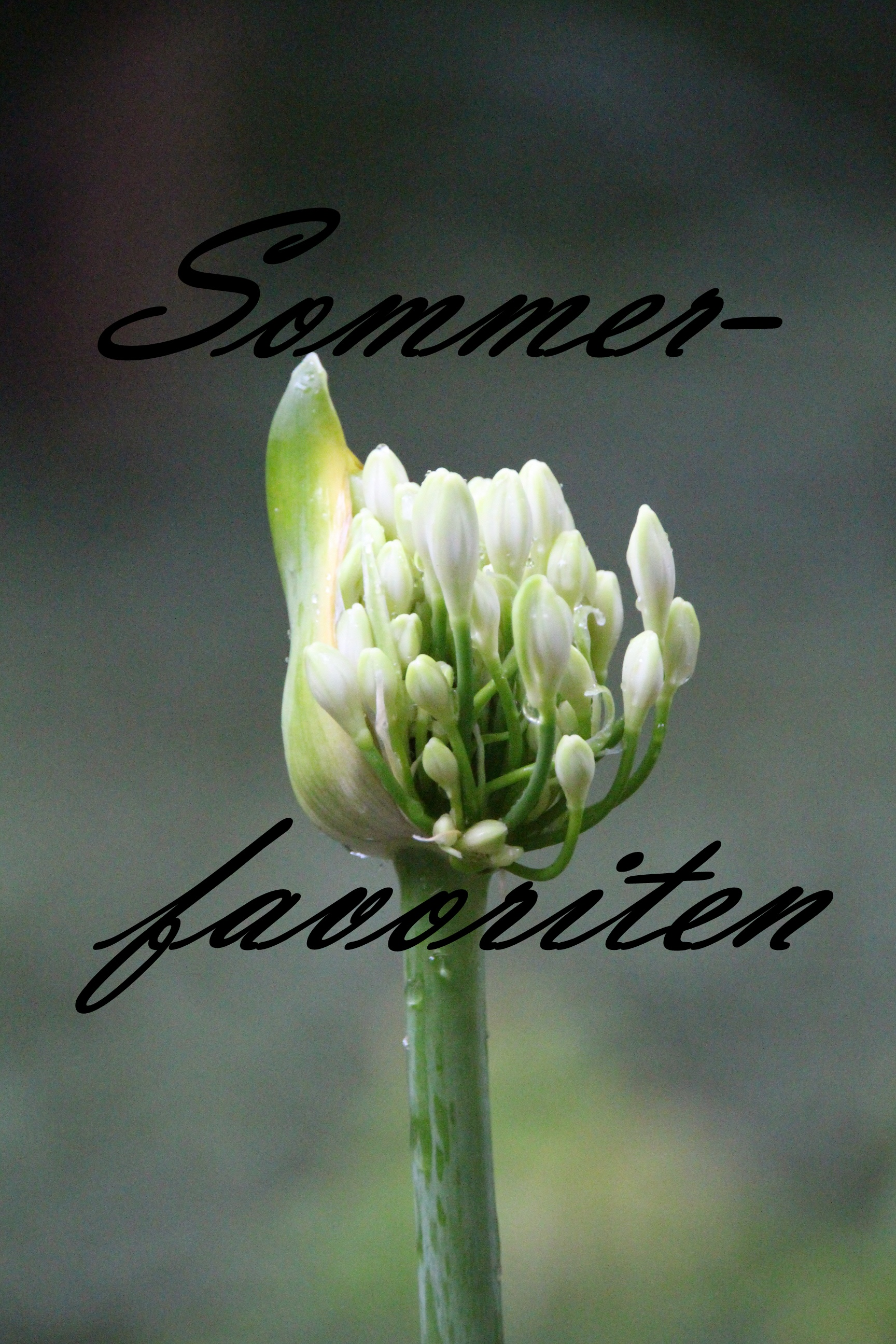 meine Sommerfavoriten … auch im Spätsommer ;-)