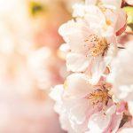 Hallo März – hallo Frühling … mit ganz viel Sonnenschein und Genuss