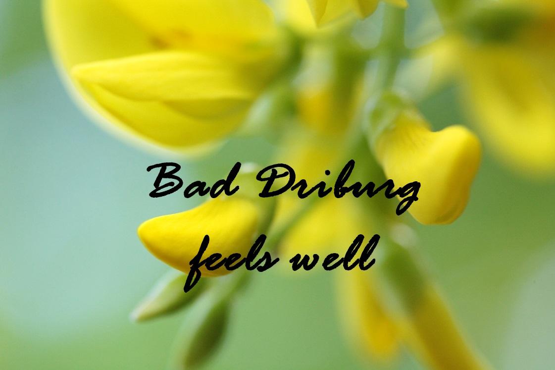 bad-driburg-feels-well-bloggerwochenende-header-das-leben-ist-schoen