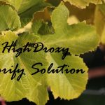 erweiterte Poren & unreine Haut: HighDroxy Porify Sulution