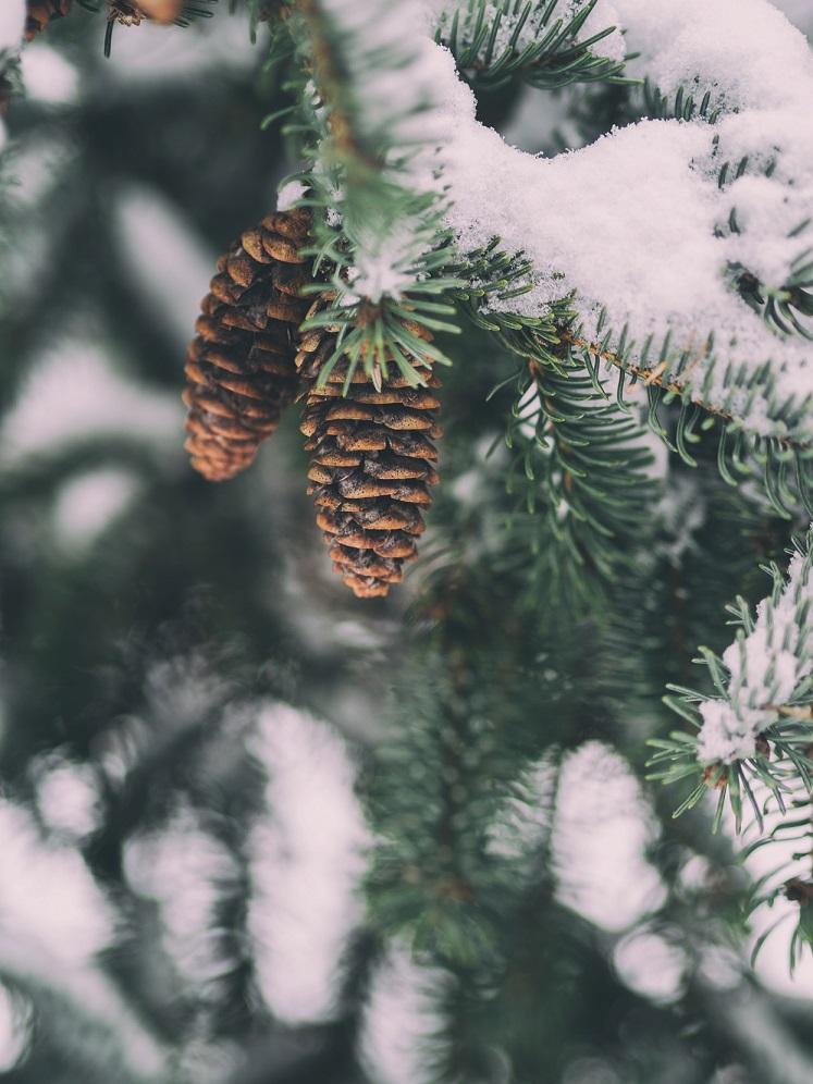 so-duftet-der-winter-aaron-burden-tannengruen-das-leben-ist-schoen
