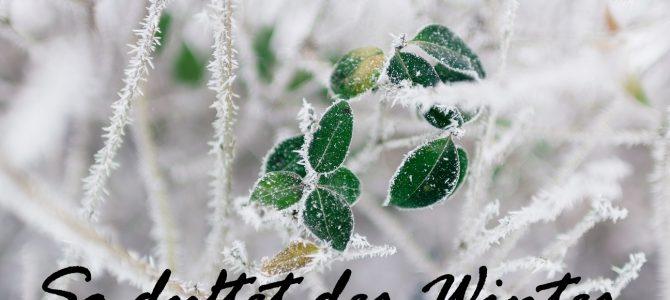 So duftet der Winter: mit welchen Düften nehme ich den Winter wahr