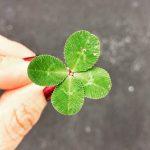 Zitat der Woche 22 | 2018: … wie entstehen Glück und Unglück