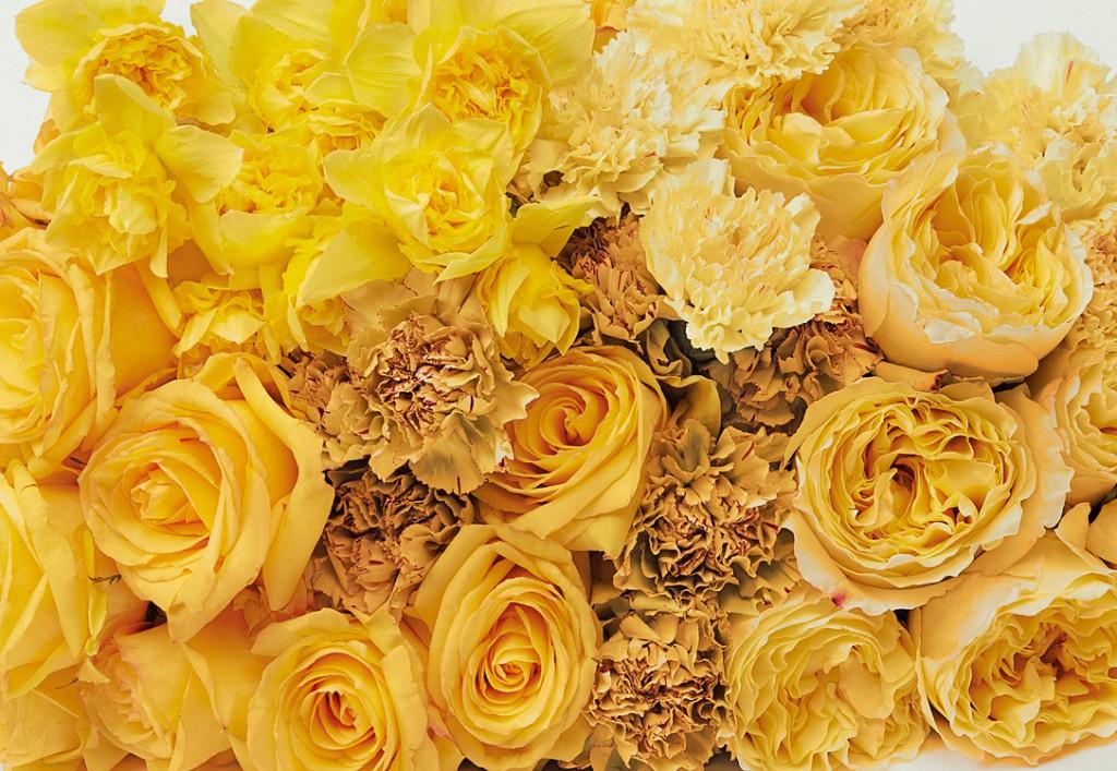 Blumen_04