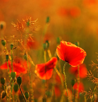 © Fotoline/Photocase.com