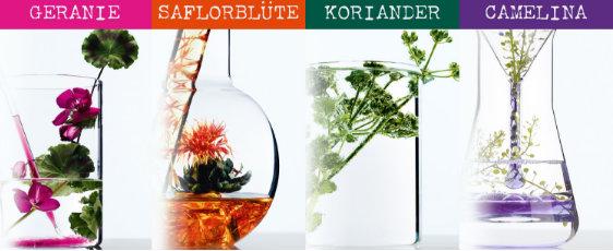 L'ORÈAL Botanicals Fresh Care_Inhaltsstoffe