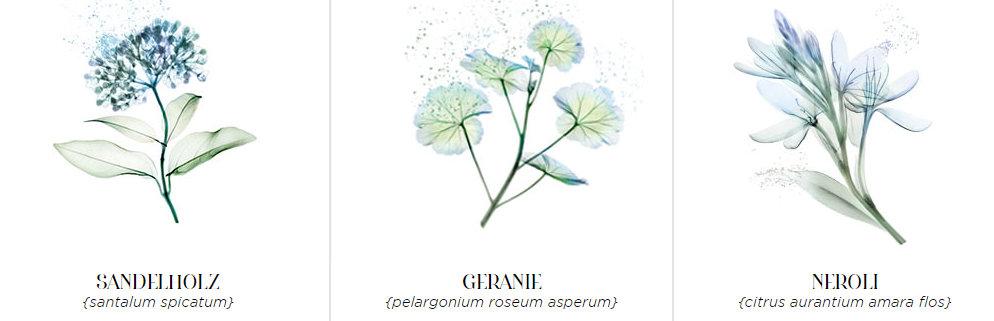 Gesichts-und-Verwöhnpflege-roger-gallet_Aura-Mirabilis-18-destilierte-Heilpflanzen_001