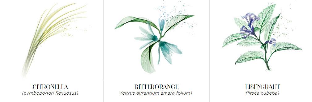 Gesichts-und-Verwöhnpflege-roger-gallet_Aura-Mirabilis-18-destilierte-Heilpflanzen_005